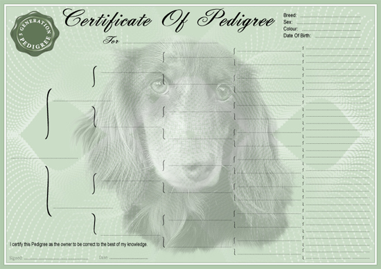 Datchsund Long Hair Miniature Pedigree Certificate