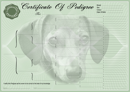 Datchsund Smooth Coat Miniature Pedigree Certificate