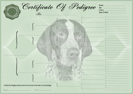 German Shorthaired Pointer Pedigree Certificate