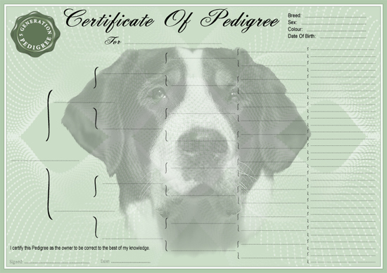 Greater Swiss Mountain Dog Pedigree Certificate