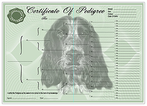 English Cocker Spaniel Pedigree Certificates