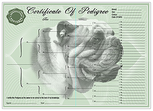 Bulldog Pedigree Certificates