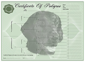 Flat Coated Retriever Pedigree Certificates