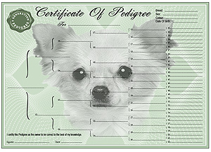 Chihuahua Long Coat Pedigree Certificates
