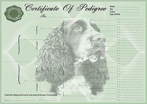 English Springer Spaniel Pedigree Certificates