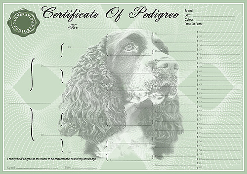 English Springer Spaniel Pedigree Dog Certificate