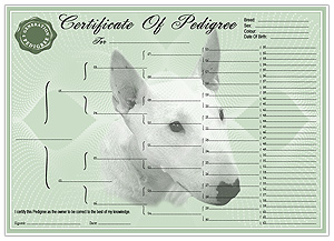 Bull Terrier Pedigree Certificates