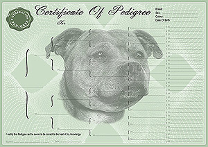 Staffordshire Bull Terrier Pedigree Certificates