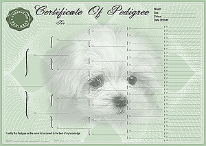 Maltese Pedigree Certificates