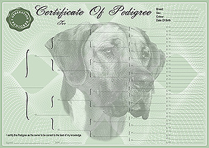 Great Dane Pedigree Certificates