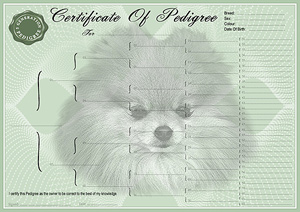 Pomeranian Pedigree Certificates