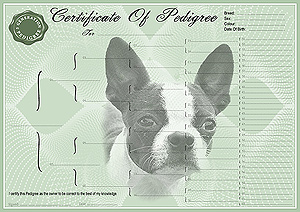 Boston Terrier Pedigree Certificates