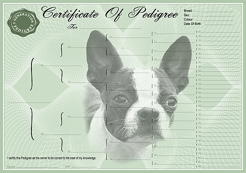 Boston Terrier Pedigree Dog Certificate