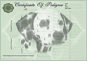 Dalmation Pedigree Certificates