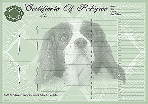 Cavalier King Charles Spaniel Pedigree Certificates