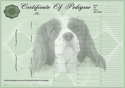 Cavalier King Charles Spaniel Pedigree Dog Certificates