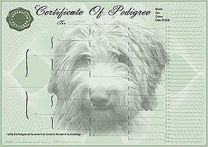 Labradoodle Pedigree Certificates
