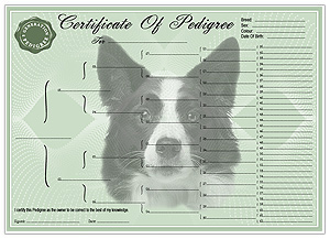 Border Collie Pedigree Certificates