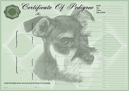 Miniature Schnauzer Personalised Pedigree Dog Certificate