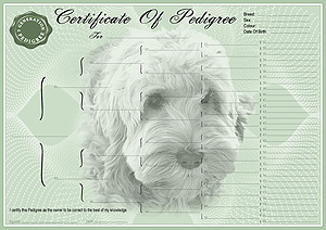 Cockapoo Pedigree Certificates