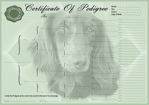 Miniature Long Haired Dachshund Pedigree Certificates