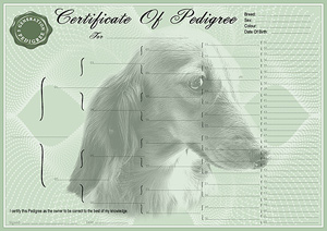 Dachshund Pedigree Certificates