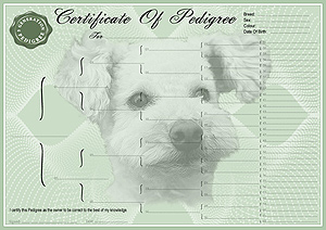 Poodle Pedigree Certificates