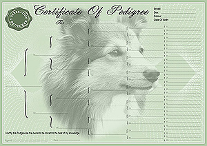 Shetland Sheepdog Pedigree Certificates