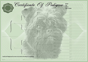 Affenpinscher Pedigree Certificates Pedigree Certificates