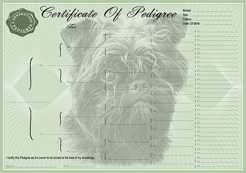 Affenpinscher Personalised Pedigree Dog Certificate