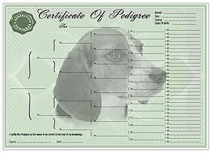 Beagle Pedigree Certificates
