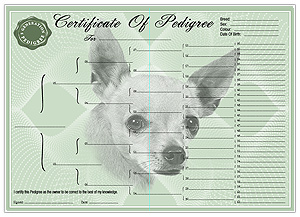 Chihuahua Smooth Coat Pedigree Certificates