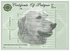 Labrador Retriever Pedigree Certificates