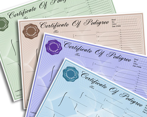 Multipack Pedigree Dog Certificate