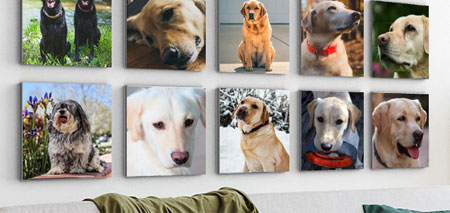Personalised Pet Canvas Prints & More